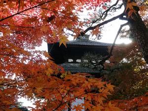 Kyoto (Japon) : Un moment d'émerveillement en Automne…