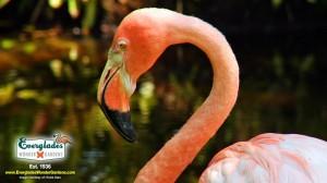 Floride : Fort Myers, Sanibel et son archipel annoncent la réouverture des jardins botaniques «Everglades Wonder Gardens» à Bonita Springs…