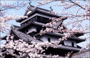 Kyoto (Japon) : La saison des cerisiers en fleurs démarre fin Mars…