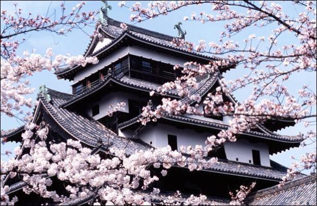 Kyoto Japon La Saison Des Cerisiers En Fleurs Demarre Fin Mars